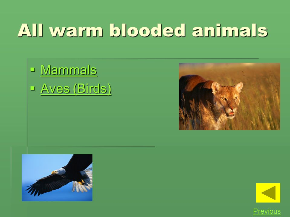 All warm blooded animals
