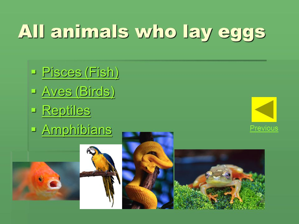 All animals who lay eggs