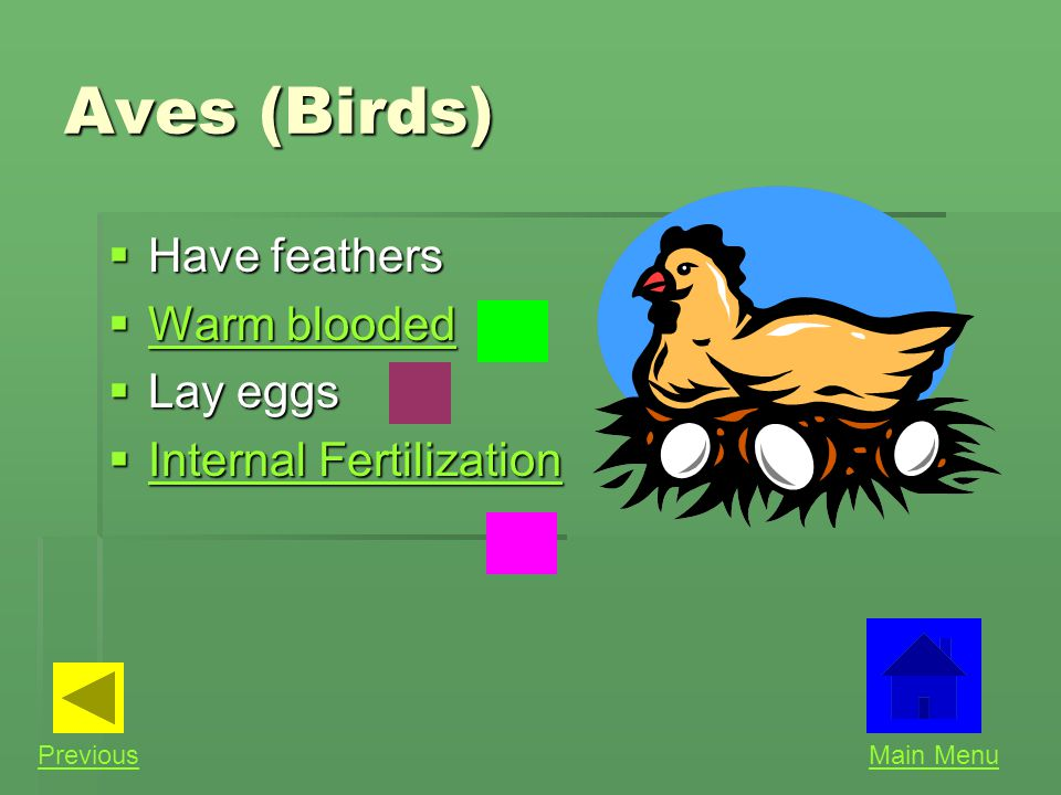 Aves (Birds) Have feathers Warm blooded Lay eggs