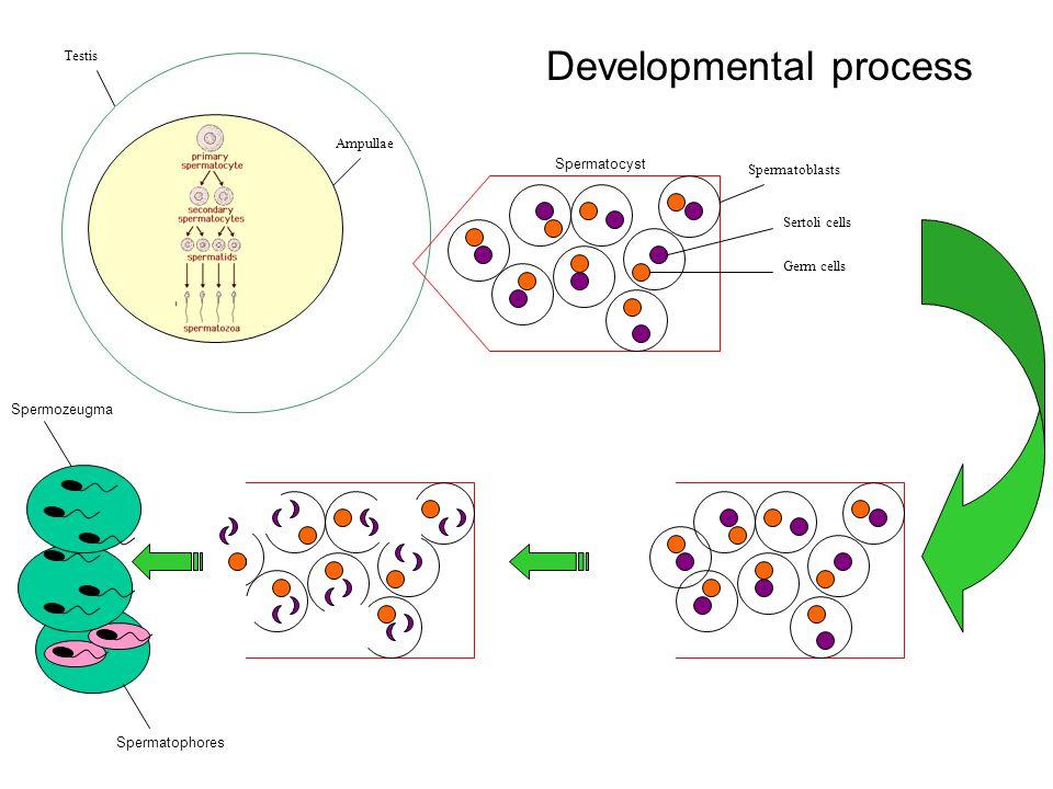 Developmental process