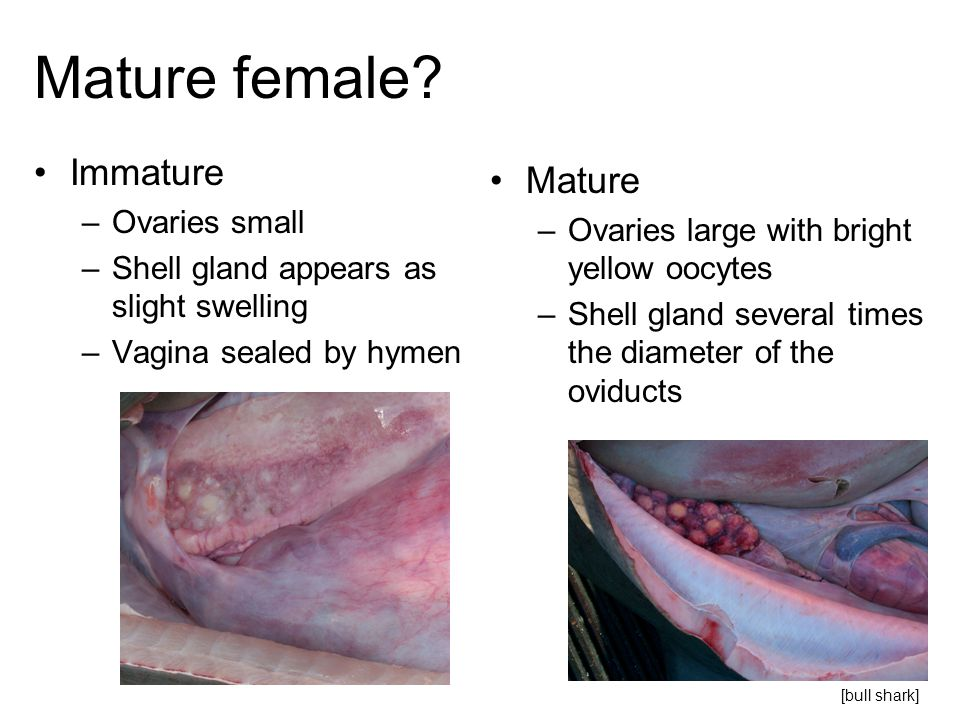 Mature female Immature Mature Ovaries small