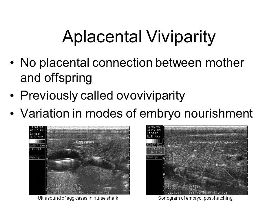 Aplacental Viviparity