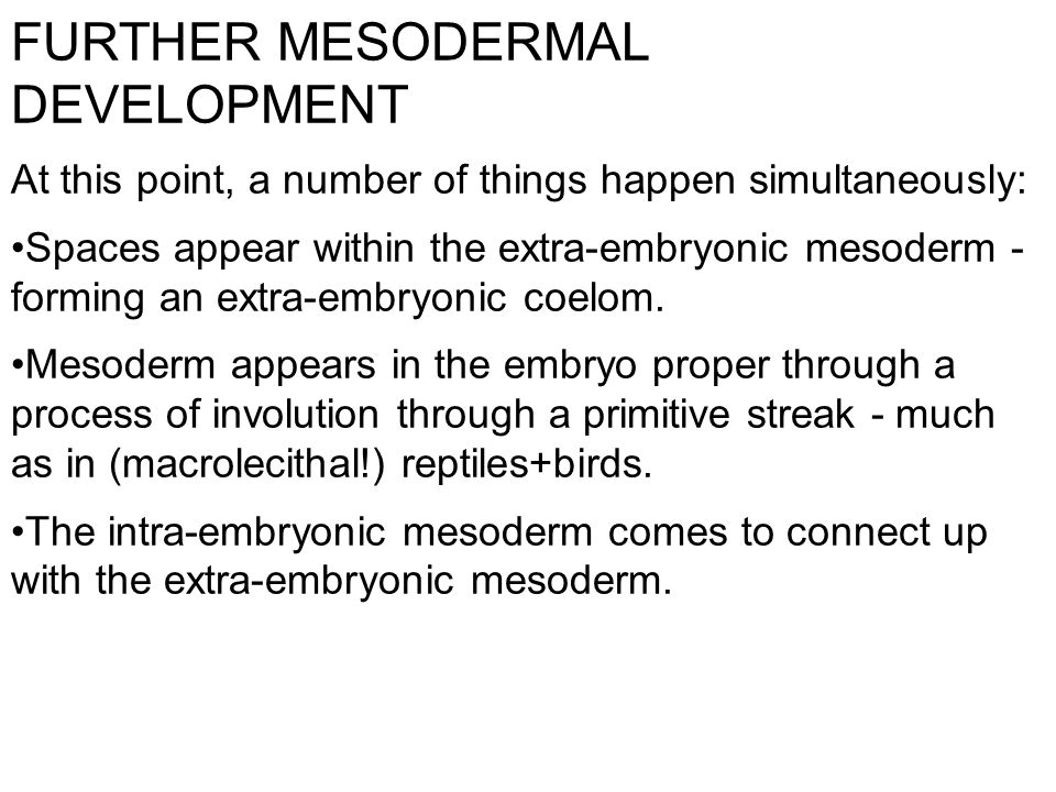 FURTHER MESODERMAL DEVELOPMENT