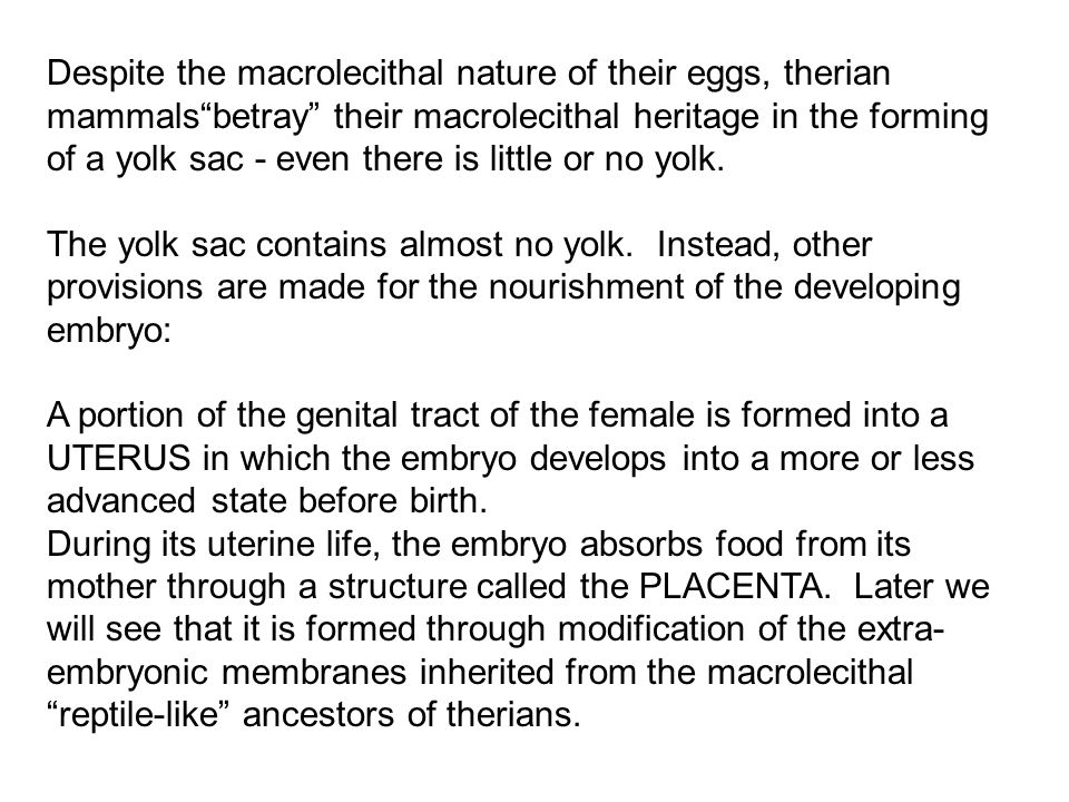 Despite the macrolecithal nature of their eggs, therian mammals betray their macrolecithal heritage in the forming of a yolk sac - even there is little or no yolk.
