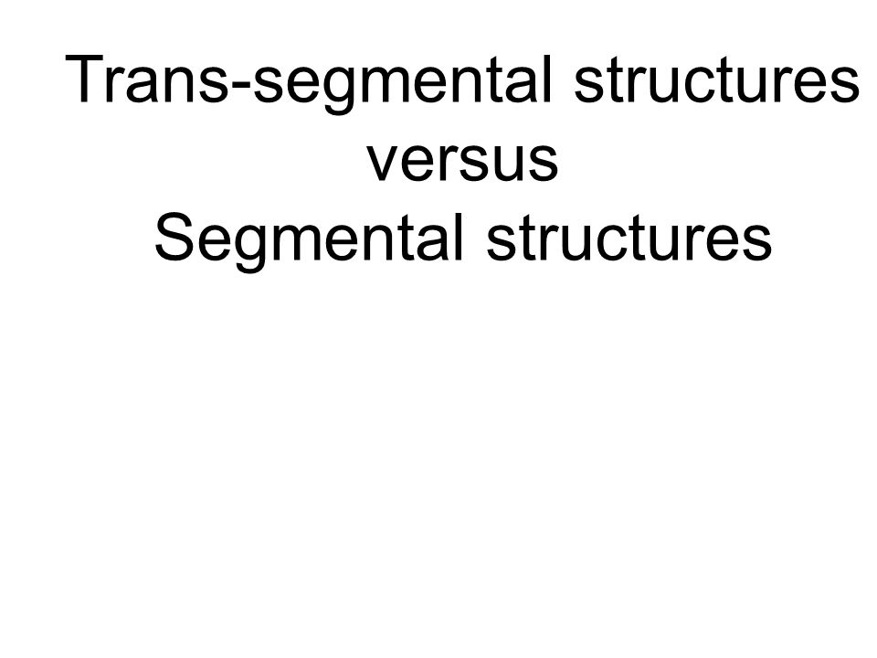 Trans-segmental structures versus