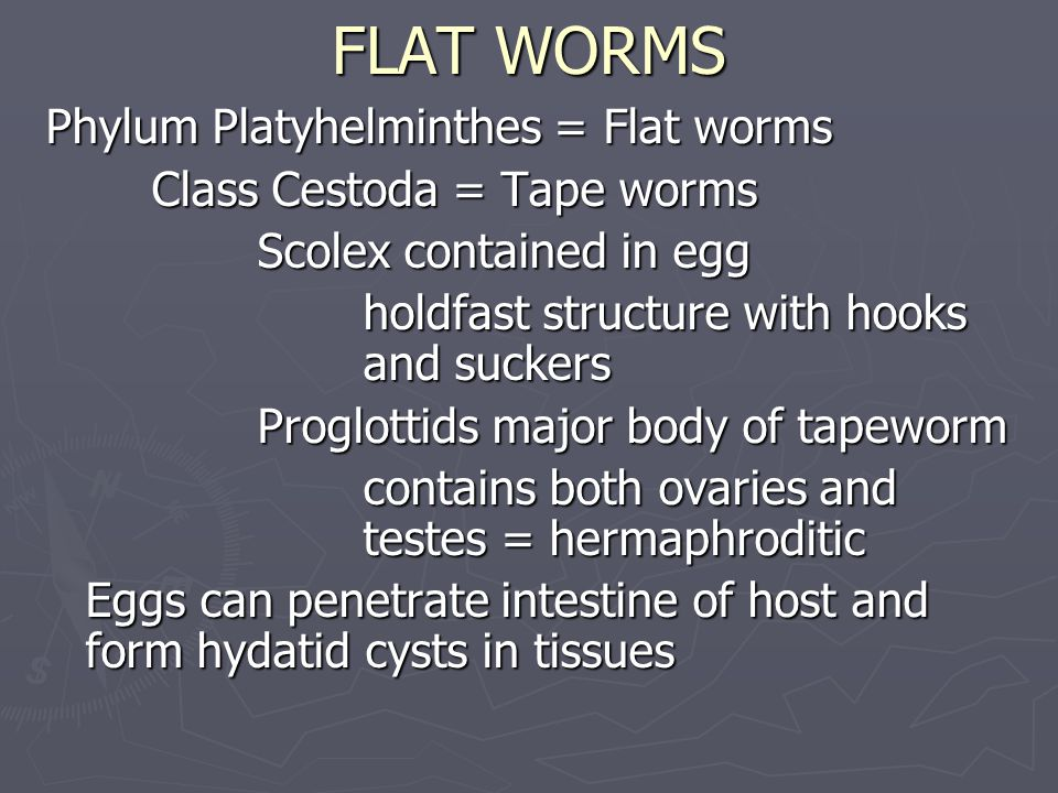 FLAT WORMS Phylum Platyhelminthes = Flat worms