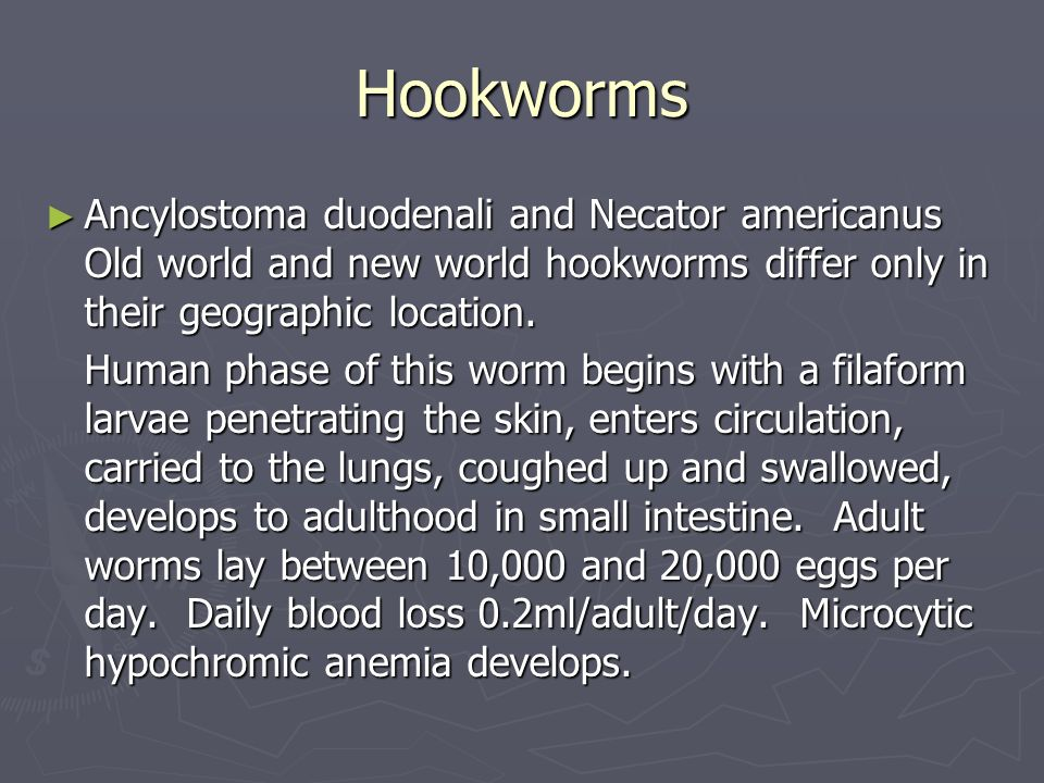 Hookworms Ancylostoma duodenali and Necator americanus Old world and new world hookworms differ only in their geographic location.