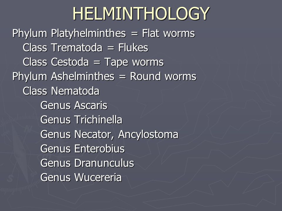 HELMINTHOLOGY Phylum Platyhelminthes = Flat worms