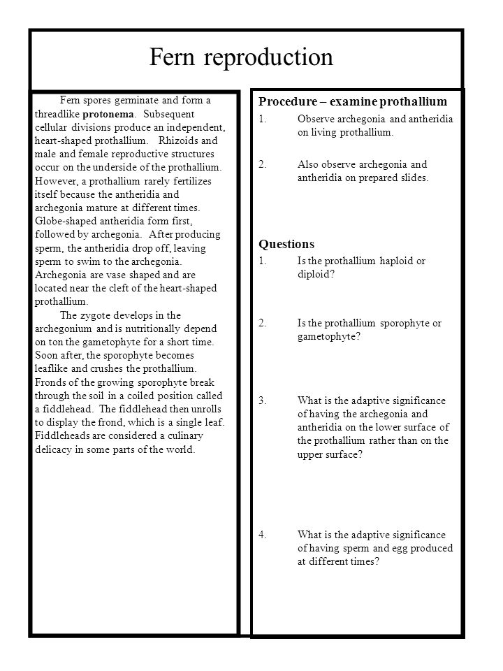Fern reproduction Procedure – examine prothallium Questions