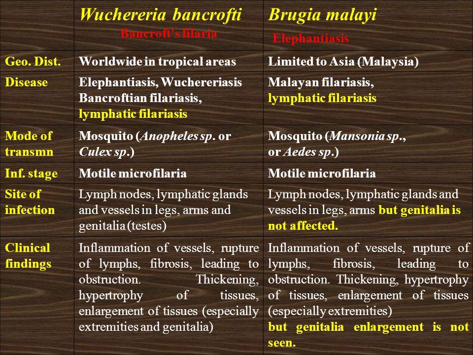Wuchereria bancrofti Brugia malayi Elephantiasis Bancroft s filaria