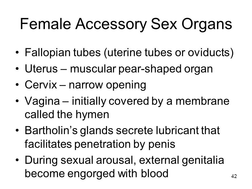 Female Accessory Sex Organs