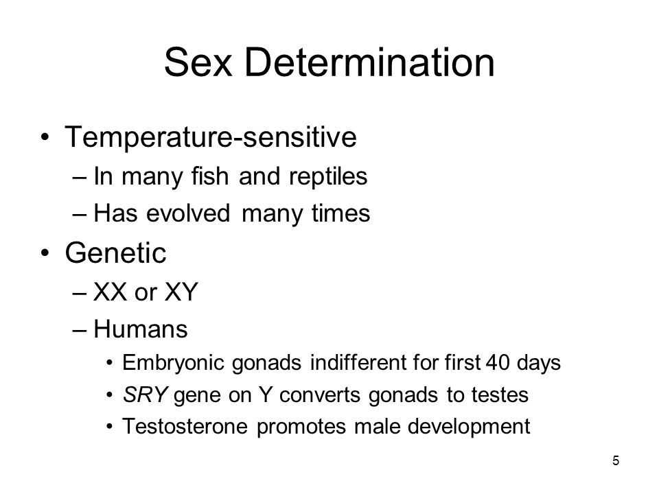 Sex Determination Temperature-sensitive Genetic