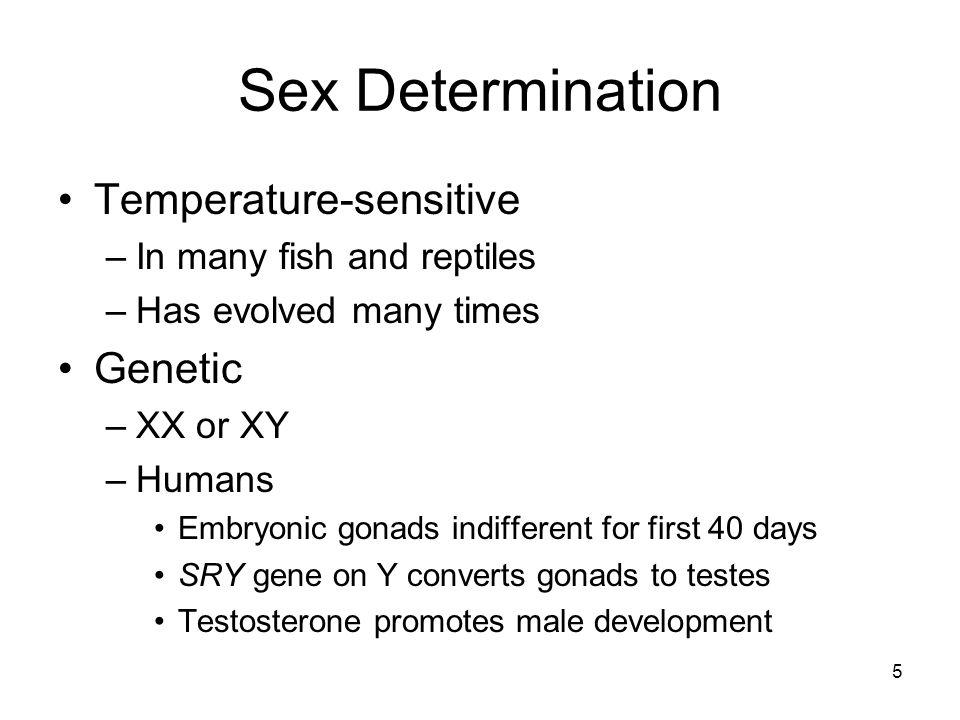 Sex Determination Temperature-sensitive Genetic