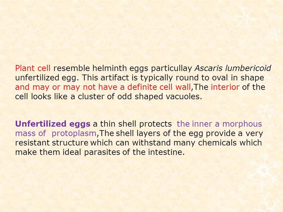 Plant cell resemble helminth eggs particullay Ascaris lumbericoid unfertilized egg.