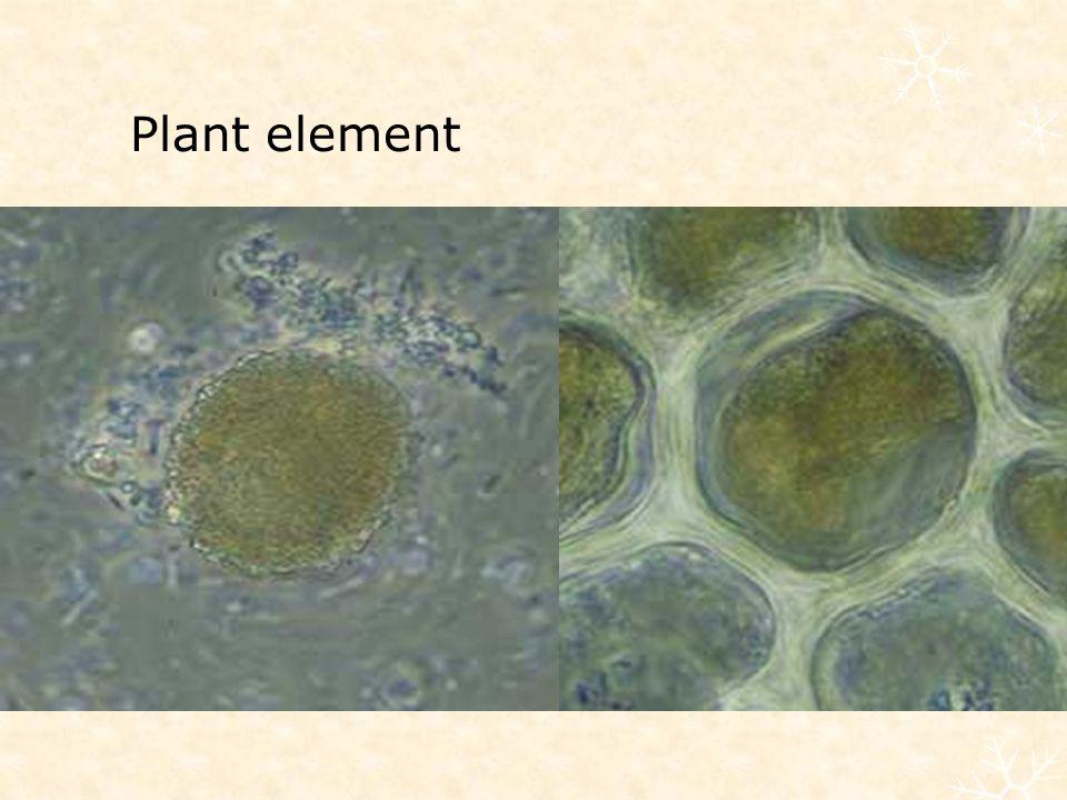 Plant element