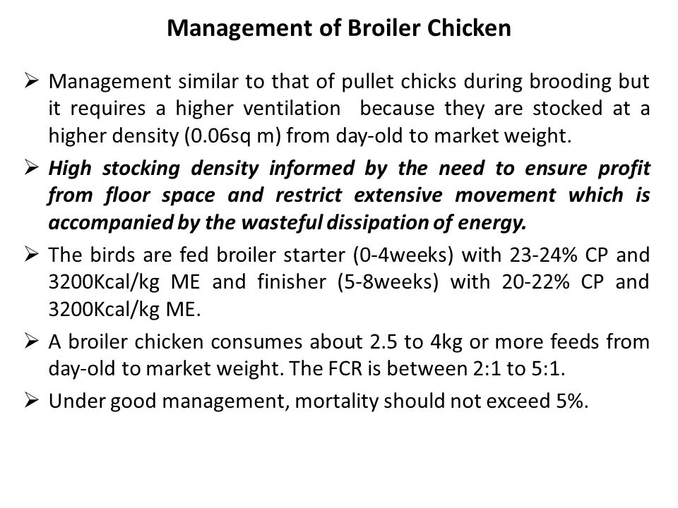 Management of Broiler Chicken