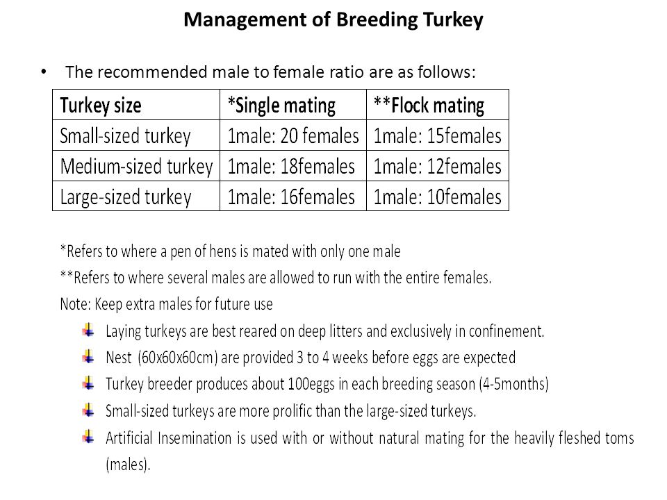 Management of Breeding Turkey