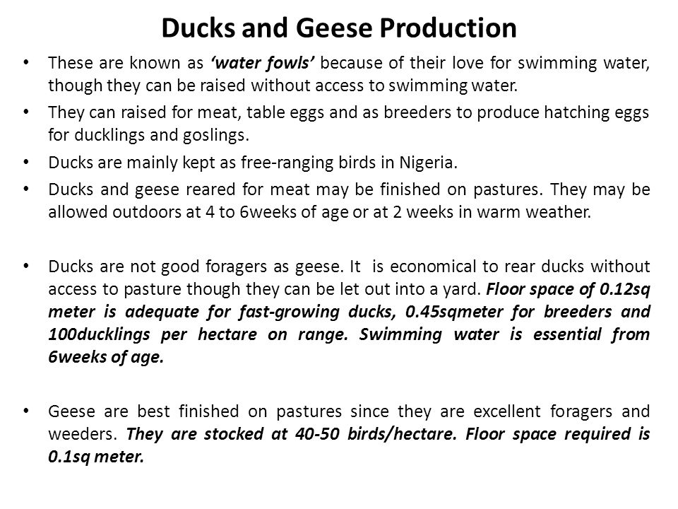 Ducks and Geese Production