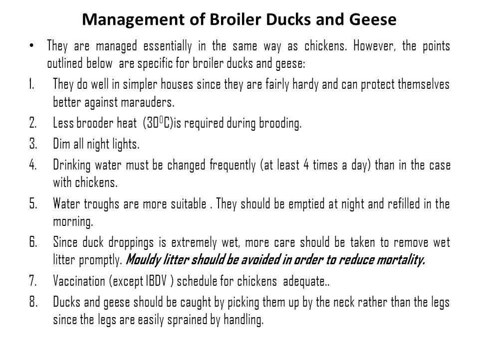 Management of Broiler Ducks and Geese