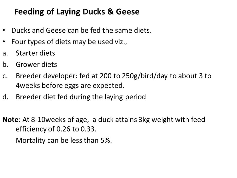 Feeding of Laying Ducks & Geese
