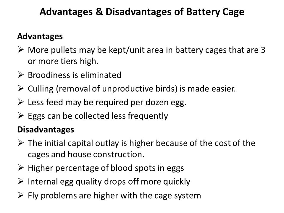 Advantages & Disadvantages of Battery Cage