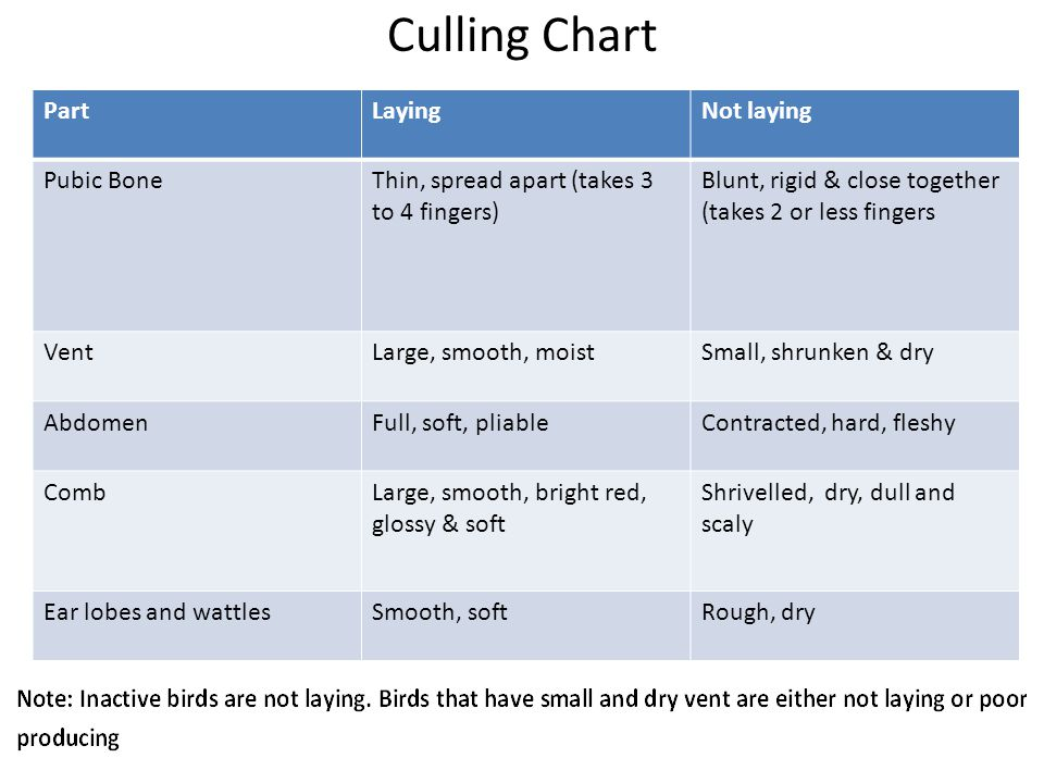 Culling Chart Part Laying Not laying Pubic Bone