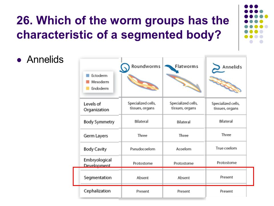 26. Which of the worm groups has the characteristic of a segmented body