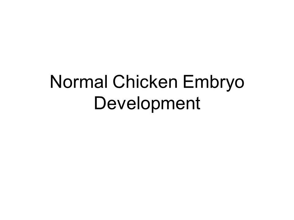 Normal Chicken Embryo Development