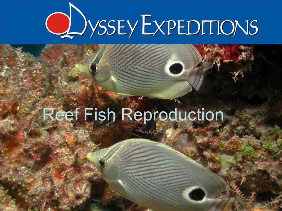 Reef Fish Reproduction