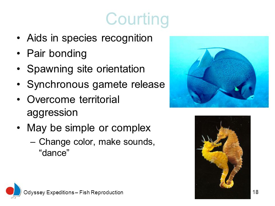 Courting Aids in species recognition Pair bonding