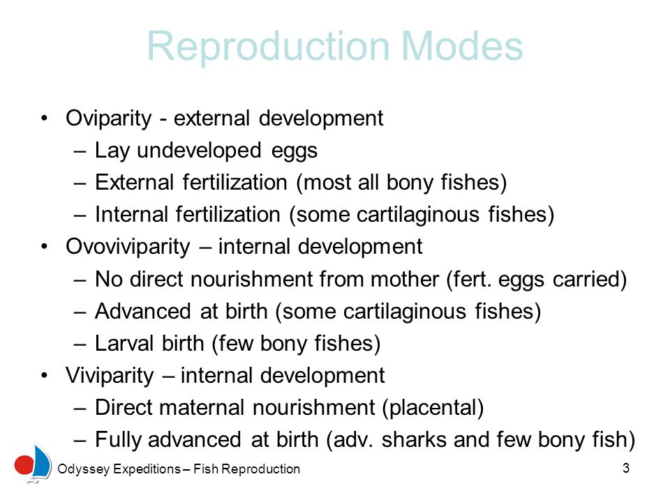 Reproduction Modes Oviparity - external development