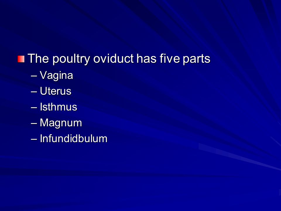 The poultry oviduct has five parts