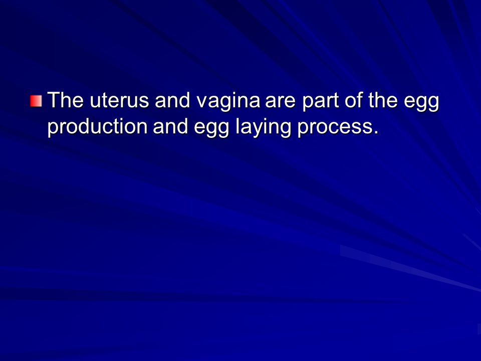 The uterus and vagina are part of the egg production and egg laying process.