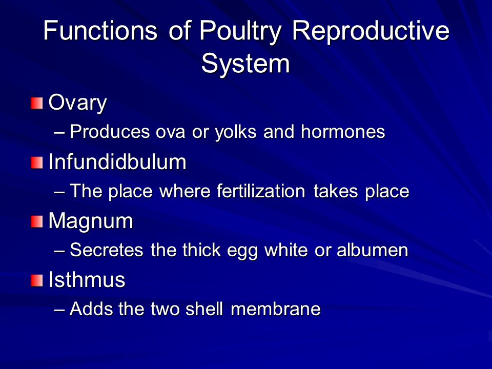 Functions of Poultry Reproductive System