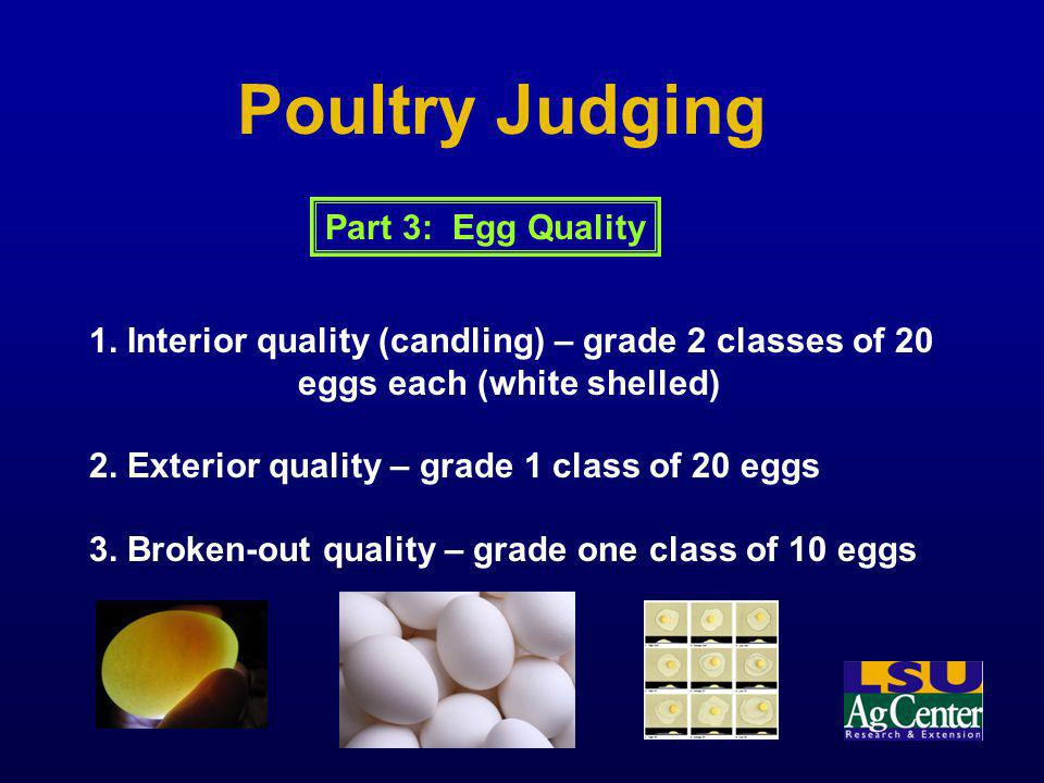Poultry Judging Part 3: Egg Quality