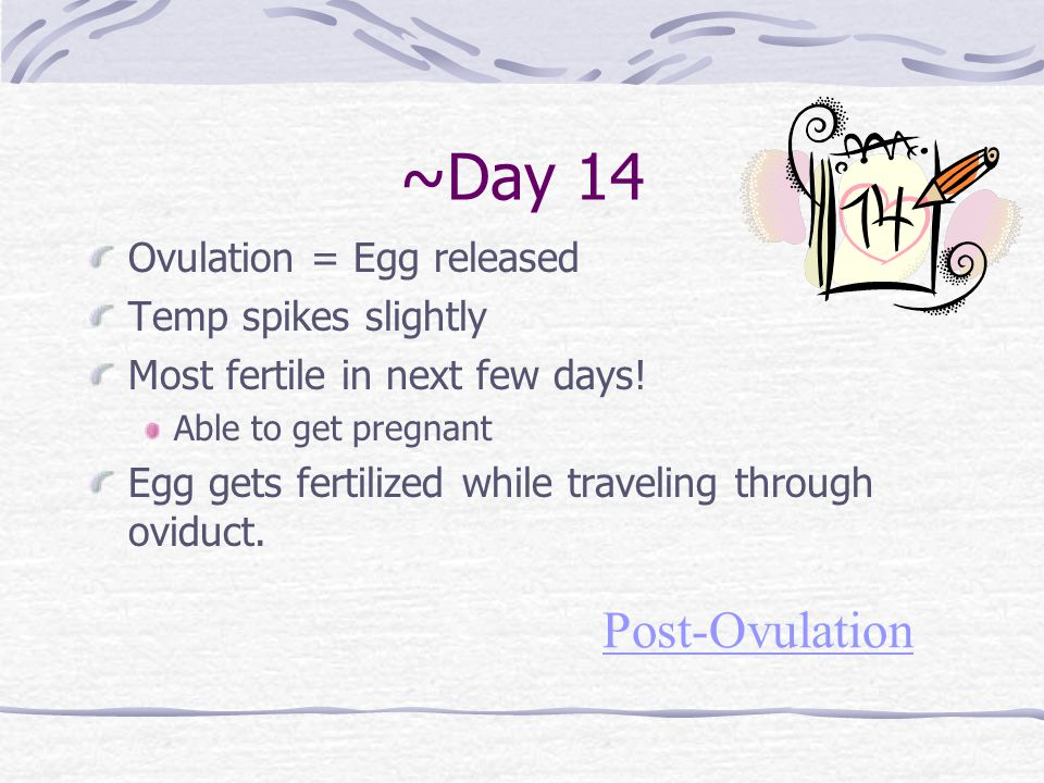 ~Day 14 Post-Ovulation Ovulation = Egg released Temp spikes slightly