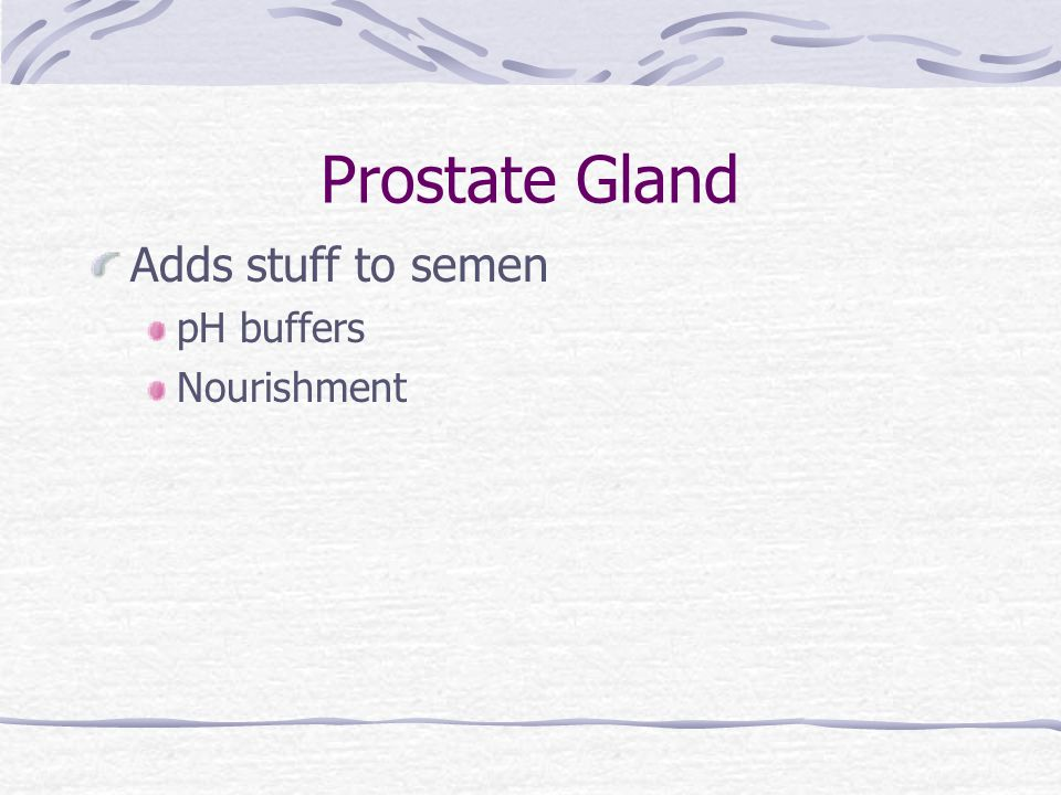 Prostate Gland Adds stuff to semen pH buffers Nourishment