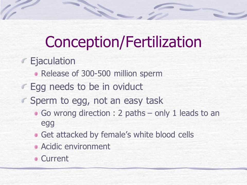 Conception/Fertilization