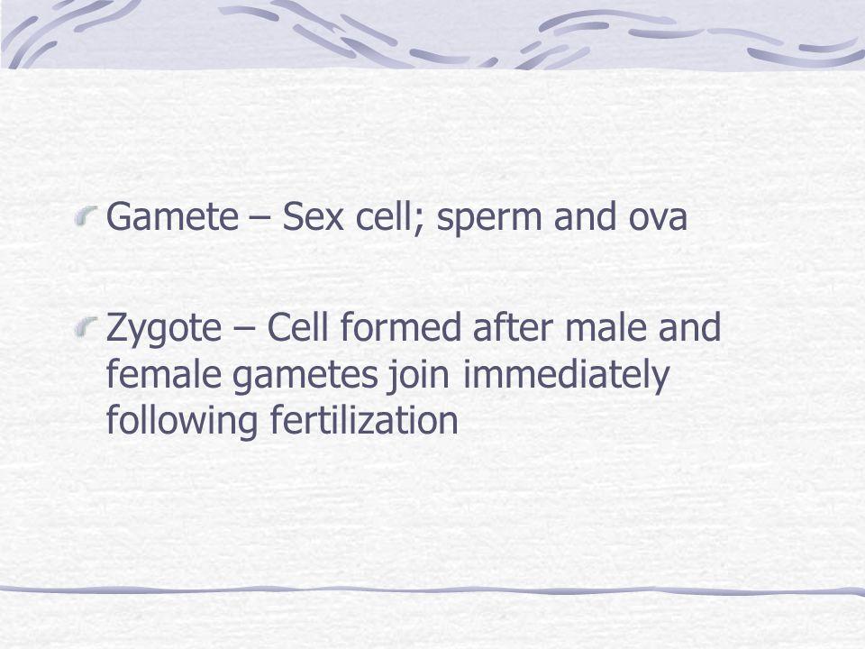 Gamete – Sex cell; sperm and ova