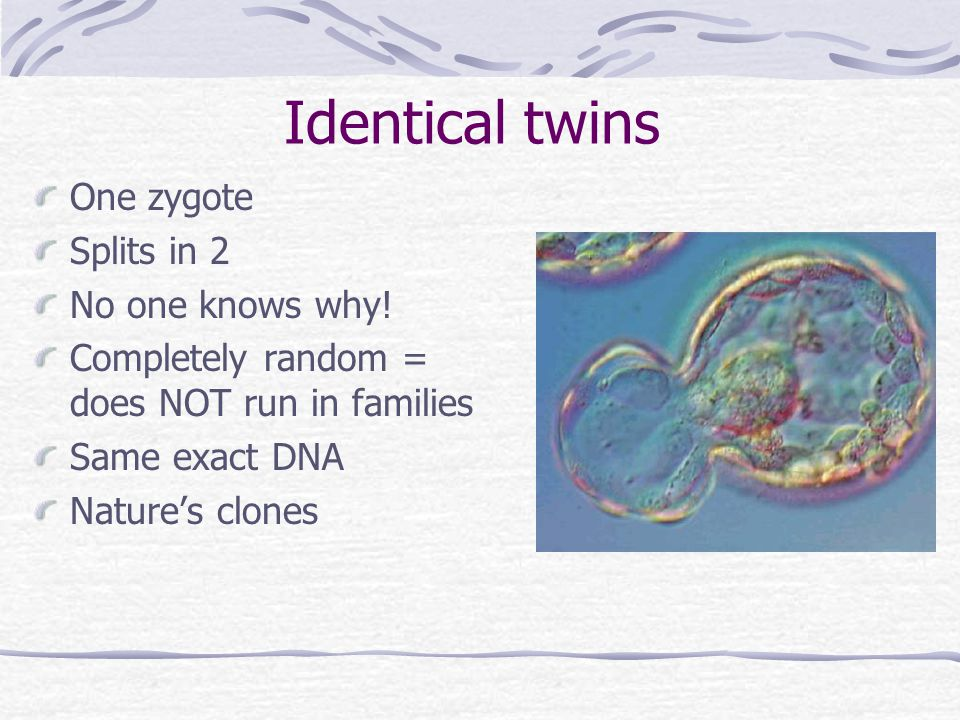 Identical twins One zygote Splits in 2 No one knows why!