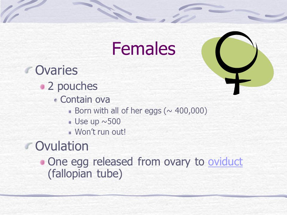 Females Ovaries Ovulation 2 pouches