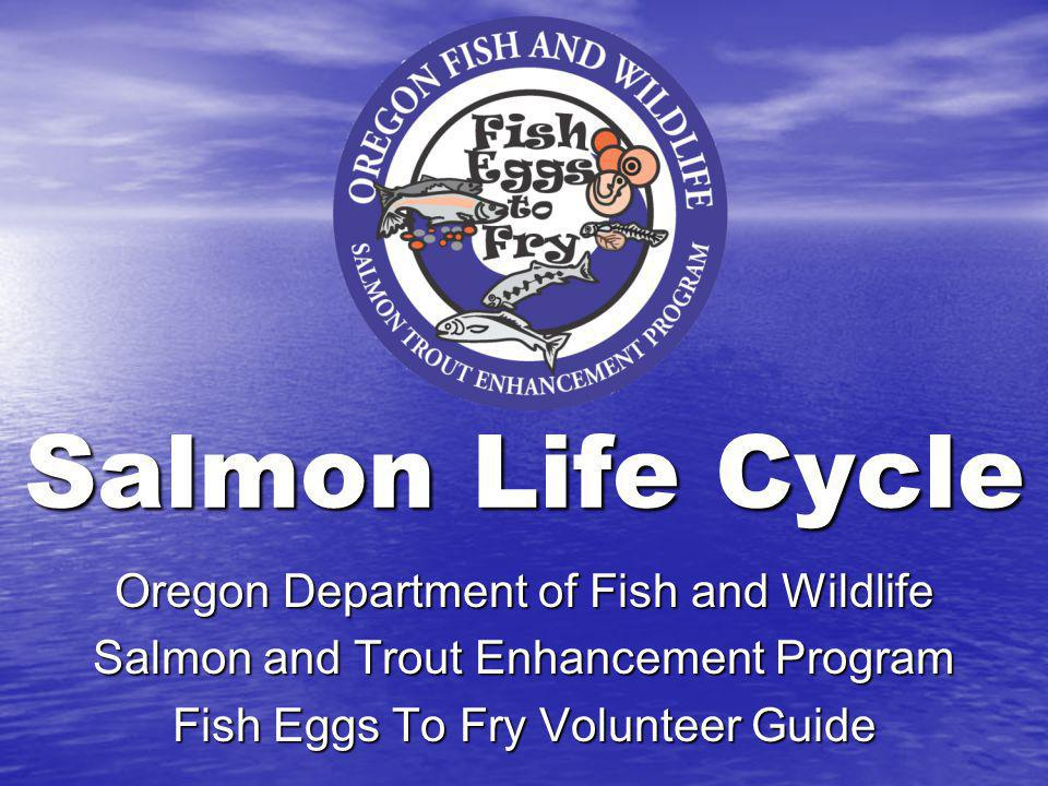 Salmon Life Cycle Oregon Department of Fish and Wildlife
