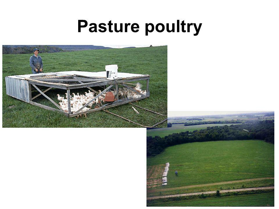 Backyard and Pasture Poultry