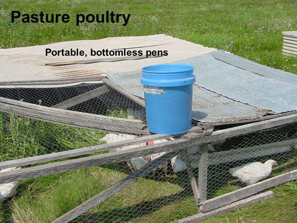 Pasture poultry Portable, bottomless pens