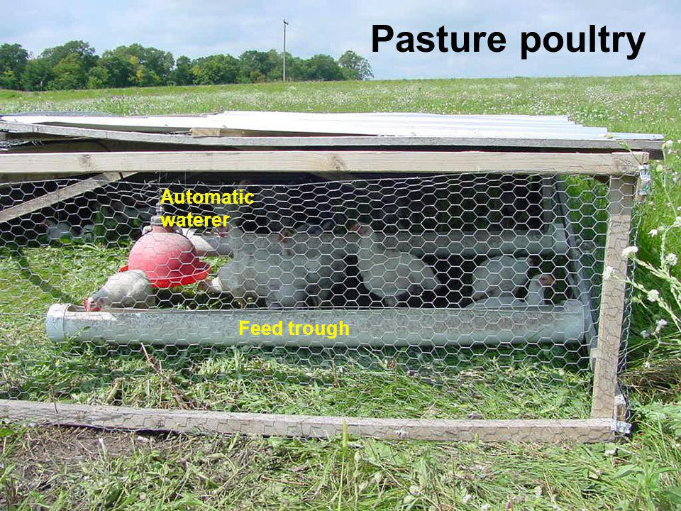 Pasture poultry Automatic waterer Feed trough