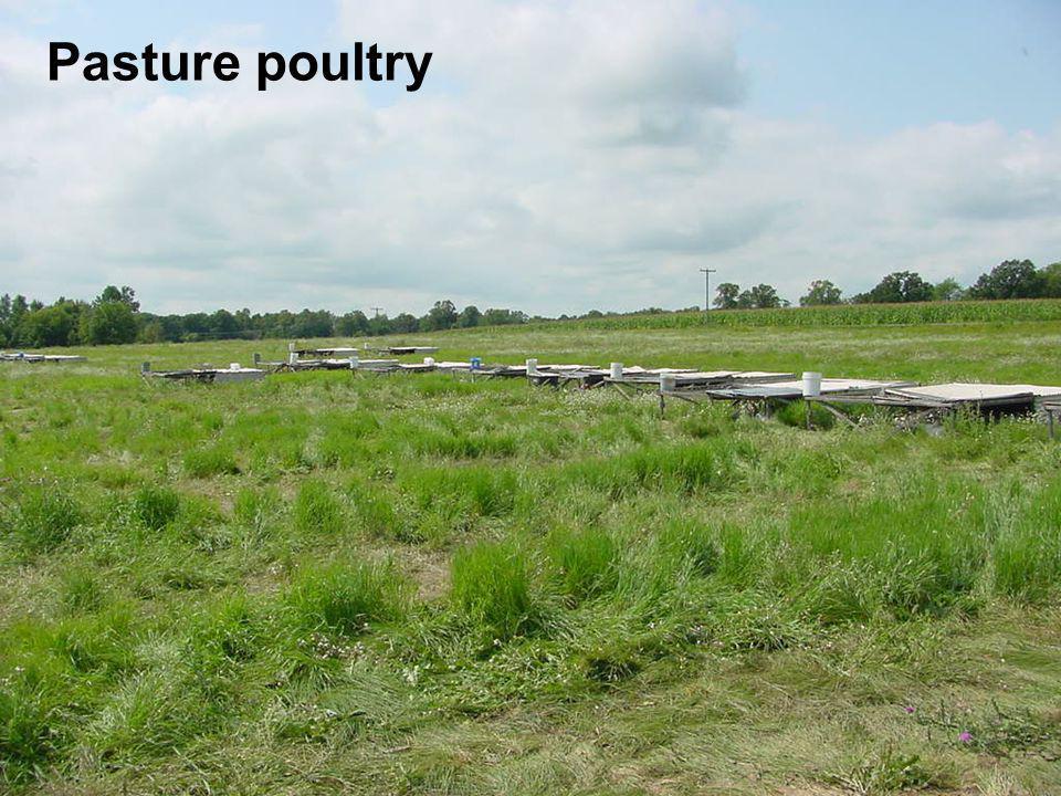 Pasture poultry