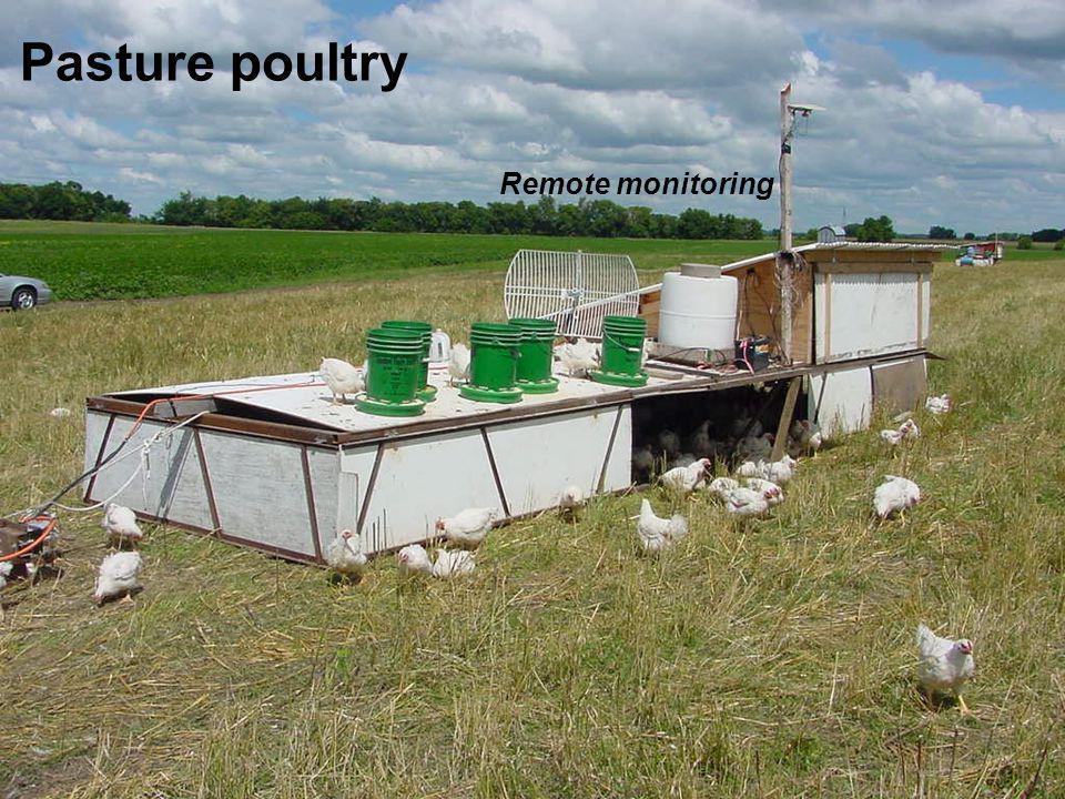 Pasture poultry Remote monitoring