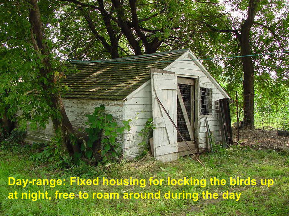 Day-range: Fixed housing for locking the birds up at night, free to roam around during the day