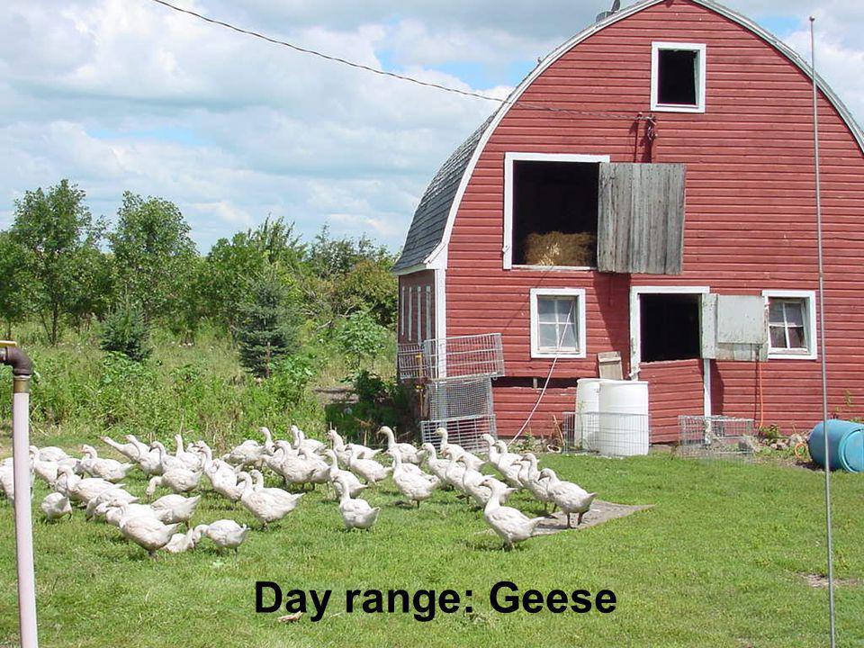 Day range: Geese