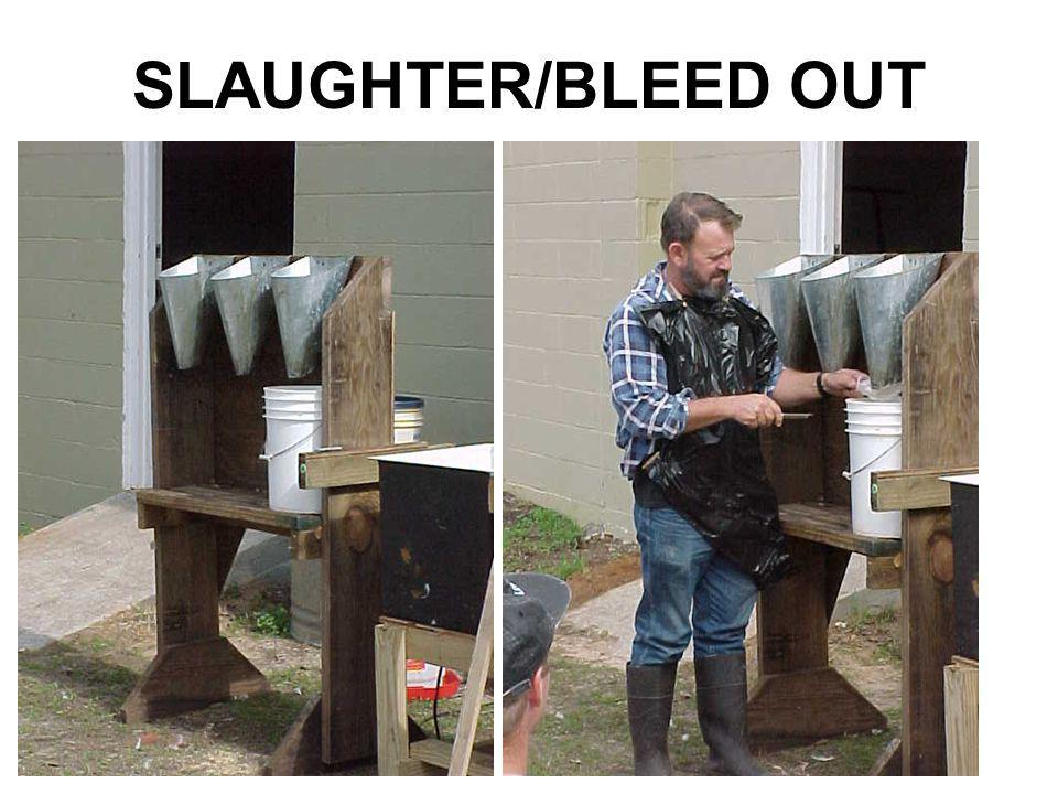 SLAUGHTER/BLEED OUT